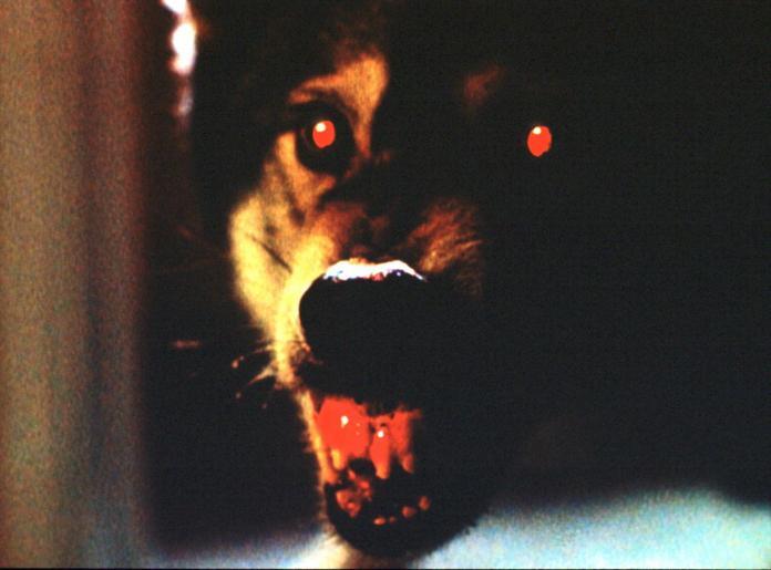 Dieser Wanshang Dhole, eine eigentlich ausgestorbene asiatische Hunderasse, soll in Kalifornien mehrere Menschen getötet haben. © Twentieth Century Fox Film Corporation